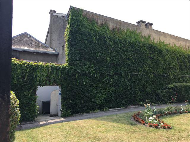 壁面緑化を取り入れるのにおすすめの場所とは?